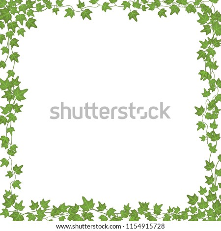 Ivy vines with green leaves. Floral vector rectangular frame isolated on white background. Illustration green plant, twig vine branch, ivy rectangular frame with copy space