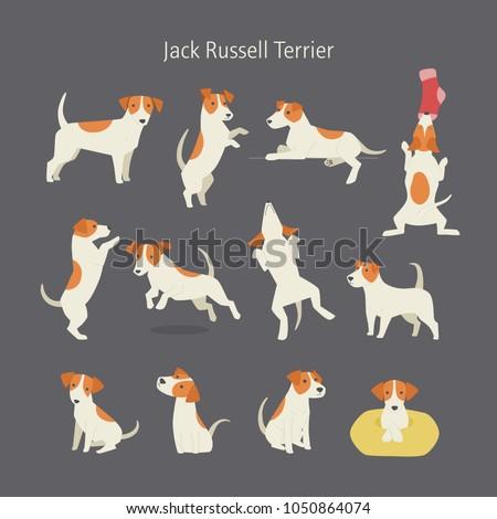 Jack russell terrier dog breed pose set. vector illustration flat design ストックフォト ©