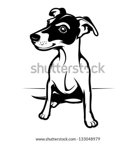 jack russell terrier. vector illustration