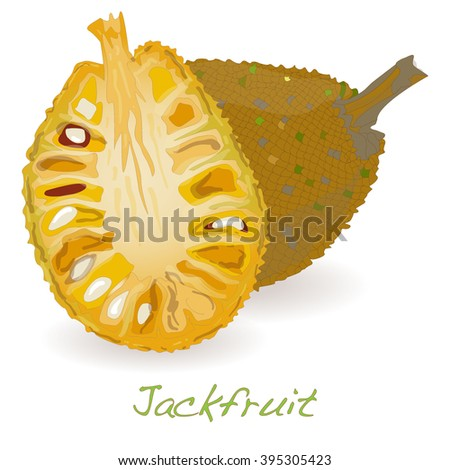 jackfruit vector isolated on