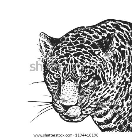 jaguar realistic portrait of