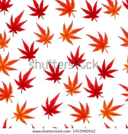 japanese maple leaves autumn