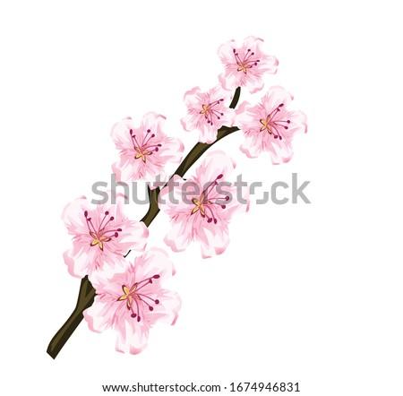 japanese pink cherry blossom