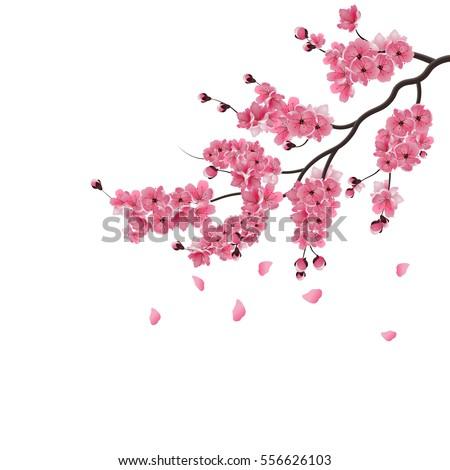 japanese sakura lush the