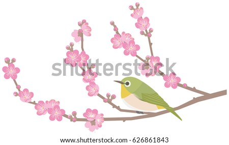 japanese white eye and plum