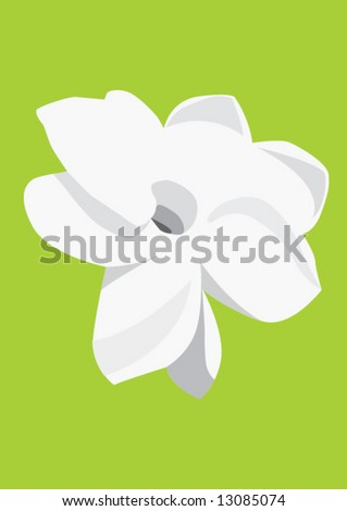 Jasmine flower on green background
