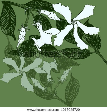 Jasmine - flowers, buds, leaves. Vector image. Wallpaper. Use printed materials, decoupage maps, posters, postcards, packaging. #1017025720
