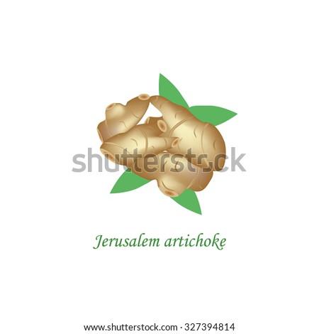 jerusalem artichoke vector