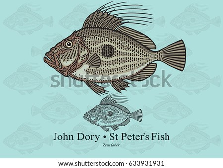john dory  saint peter s fish