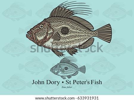 john dory vector illustration