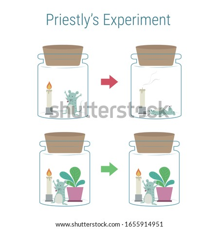 Joseph priestley's experiment. Mouse, fire, and plant experiment about oxygen. Photosynthesis phenomenon of plant. Photosynthesis phenomenon of plant experiment.