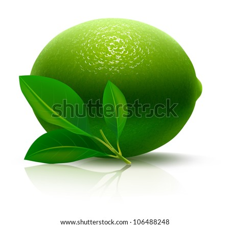 Juicy LIME. Extremely detailed VECTOR illustration, created with love to details. - stock vector