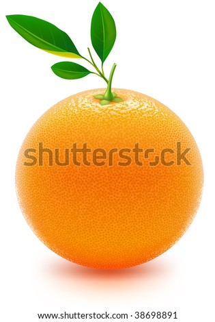 Juicy orange. Photorealistic vector, contains gradient mesh elements, lots of detail. More food design in my portfolio!