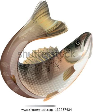 Jumping salmon fish isolated on white background.