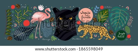Jungle, animals and tropics. Vector illustrations of flamingo, panther, tiger, leopard, palm leaves, flowers and textures. Drawings for poster, background and cover