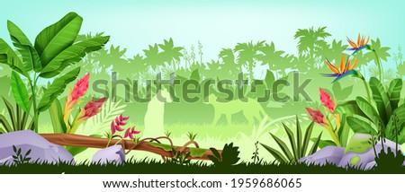 jungle background  tropical