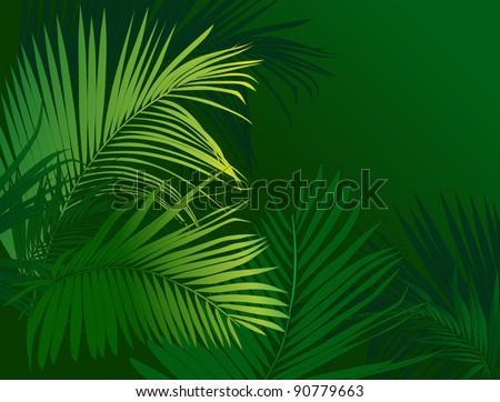 jungle rain forest (tropical plants vector image)