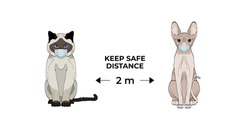 Keep the distance 2 m. Coronavirus infection spreading prevention information sign with cute hand drawn cats in medical masks.  Siamese cat and sphynx cat