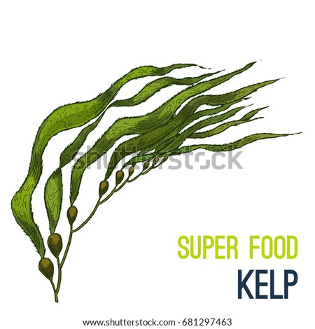 kelp full color super food