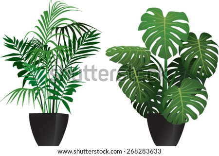 kentia and philodendron plants