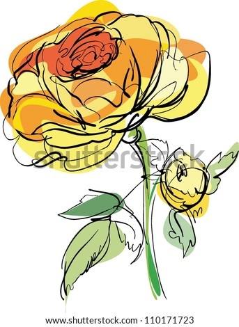 ketch of yellow rose on a white background