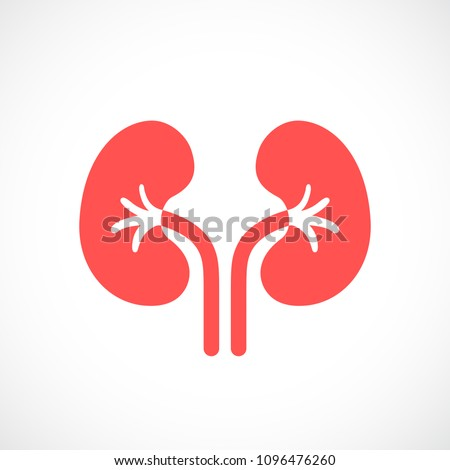 Kidneys vector icon isolated on white background Сток-фото ©
