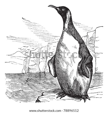 King Penguin or Aptenodytes patagonicus, vintage engraving. Old engraved illustration of King Penguin.  Trousset encyclopedia (1886 - 1891).