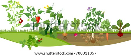 Kitchen garden or vegetable garden with different vegetables