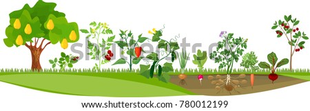 kitchen garden or vegetable