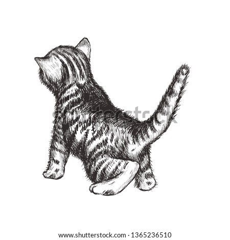 kitten hand drawing vector