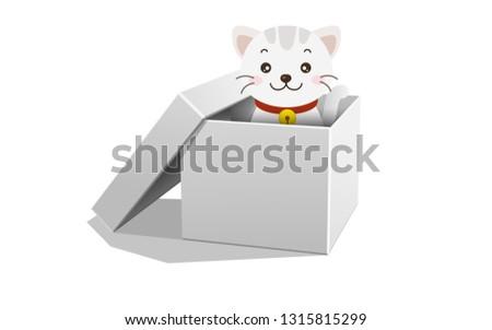 kitten in the paper box