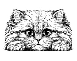 Kitten. Wall sticker. Black and white, graphic, artistic drawing of a cute fluffy kitten.