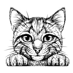 Kitten. Wall sticker. Black and white, graphic, artistic drawing of a cute striped kitten is pretty squinting.