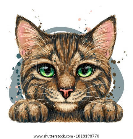 Kitten. Wall sticker. Color, graphic, artistic drawing of a cute striped kitten is pretty squinting. Separate layer. Watercolor style. Digital vector drawing