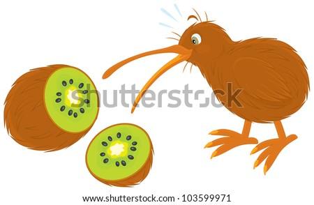kiwi bird and kiwi fruit