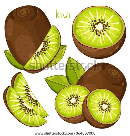 kiwi isolated  kiwi vector