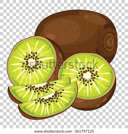 kiwi isolated  vector kiwi