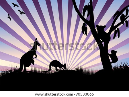 koala and kangaroo's in the evening feeding