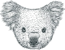 Koala portrait illustration, drawing, engraving, ink, line art, vector
