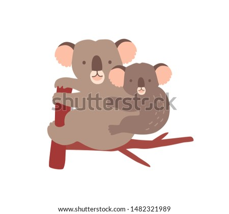 Koala with baby on tree branch isolated on white background. Family of wild Australian arboreal marsupial animals. Parent with youngling, mother with joey on back. Flat cartoon vector illustration. Stockfoto ©