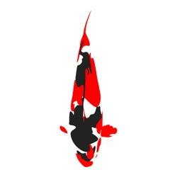 koi fish vector in the dominant red, black and white colour of koi. elegant koi image of showa variety.