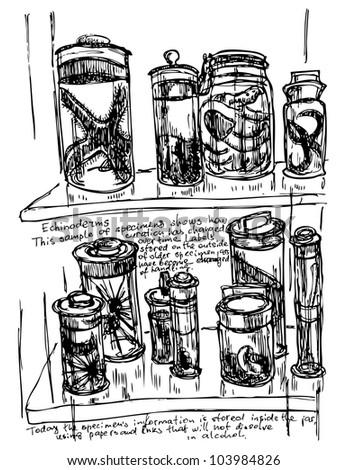 Laboratory bottle sketch in vector