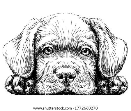 labrador puppy sticker on the