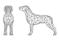 Labrador retriever dog polygonal lines illustration. Abstract vector dog on the white background