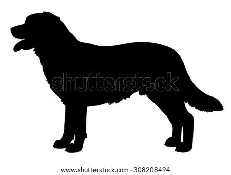 labrador retriever purebred dog standing in side view vector silhouette isolated