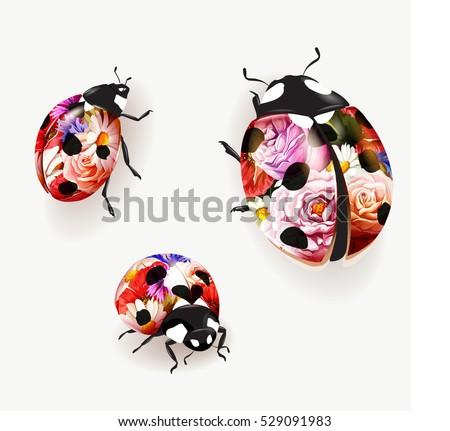 ladybird illustration set of