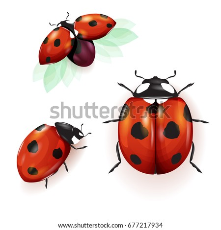 ladybird illustration set of