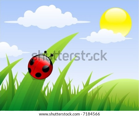 ladybird in the grass  vector