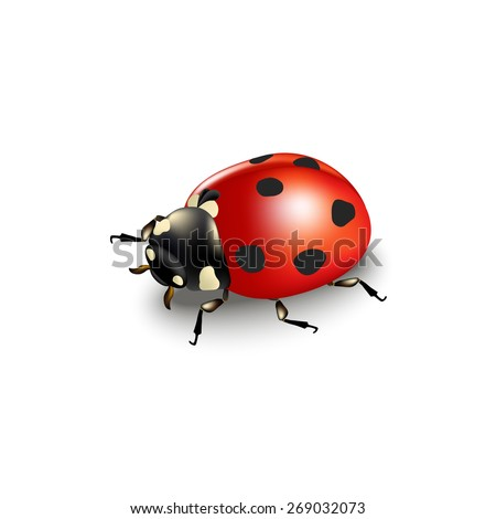 ladybird isolated on white