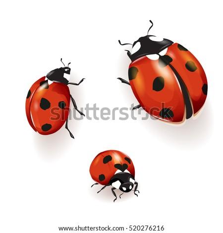 ladybird  ladybird illustration